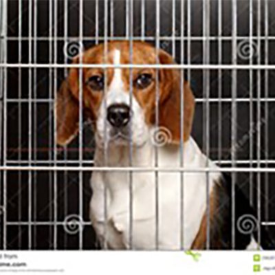 It's Time To Get out of our cages and be set FREE!